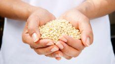 Tahıllar Ve Beslenmedeki Önemi